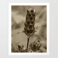Dead Weed Art Print