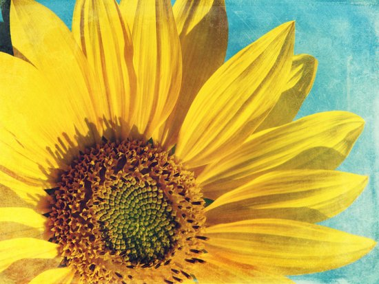 pure sunshine Art Print