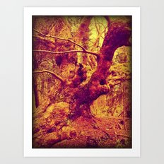 Old Man of the Woods. Art Print