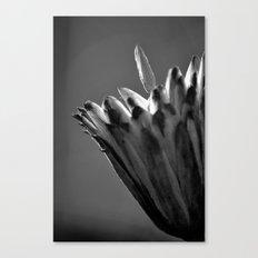 Tulip Tree Fruit Canvas Print