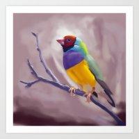 Gouldian Finch Art Print