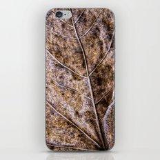 frosty old leaf iPhone & iPod Skin