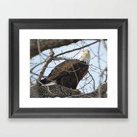 Eagles of Wisconsin 1 - A Wildlife Art Print Framed Art Print