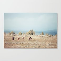 Oregon Wilderness Horses Canvas Print