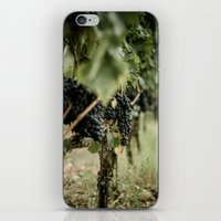 Vinyard iPhone & iPod Skin