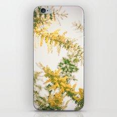 Wild Boughs iPhone & iPod Skin