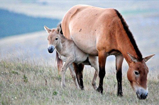 Baby Horse... Art Print