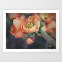 Orange Blossoms {2} Art Print