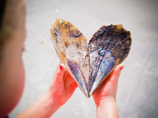 Heart in the Shape of a Shell Art Print