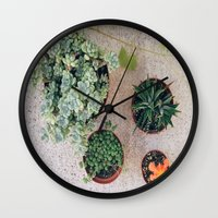 Drought Friendly Plants Wall Clock