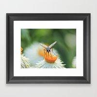 Bug On A Flower Framed Art Print