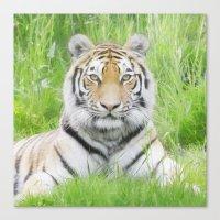 Tiger Stare Canvas Print