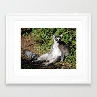 Ring Tailed Lemur Framed Art Print