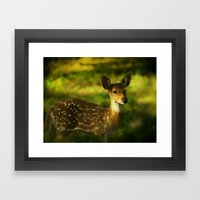 Indian Deer Framed Art Print
