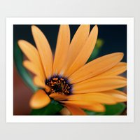 Spring Orange Bloom Art Print