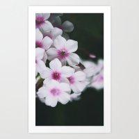 Summertime Phlox Art Print