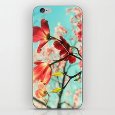 Spring dogwood blossoms iPhone & iPod Skin