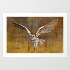 Barn Owl in Flight Art Print