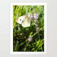 Opaque Butterfly Art Print