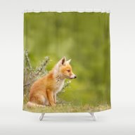 The Cute Fox Kit (Red Fo… Shower Curtain