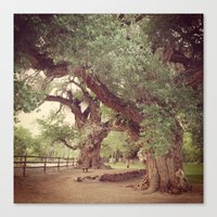 Mighty Cottonwood Trees Canvas Print