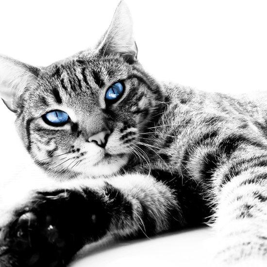 Blue Eyes #2 Art Print