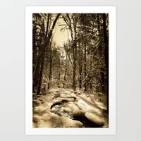 A Natural Path Art Print