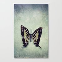 Vintage Butterfly 5 Canvas Print