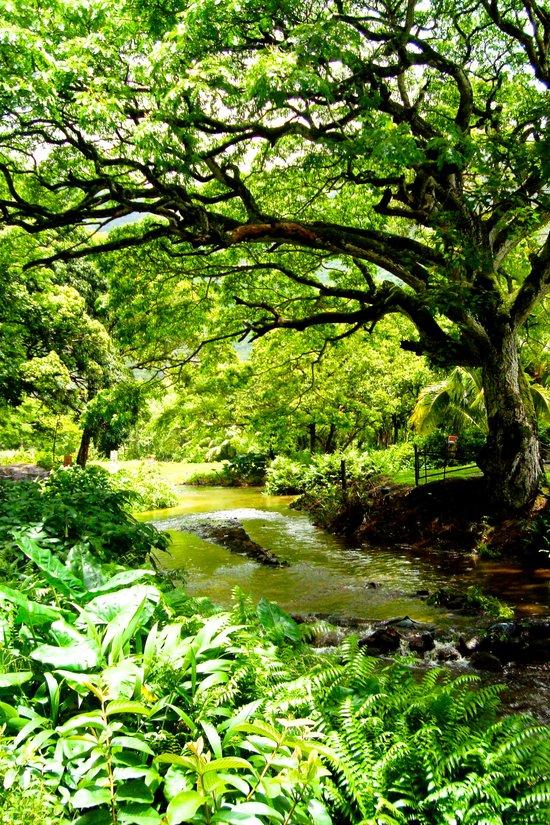Hawaii Hidden Valley Art Print