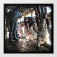The Shearer And The Rous… Canvas Print