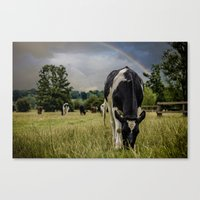 Rainbow Cow Canvas Print