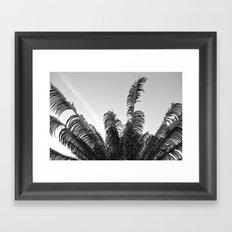 DC Palms Framed Art Print