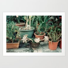 Roadside Greenery Art Print