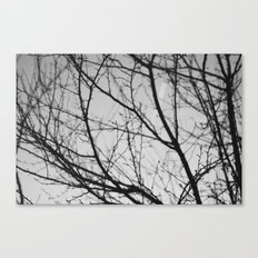 january tree Canvas Print