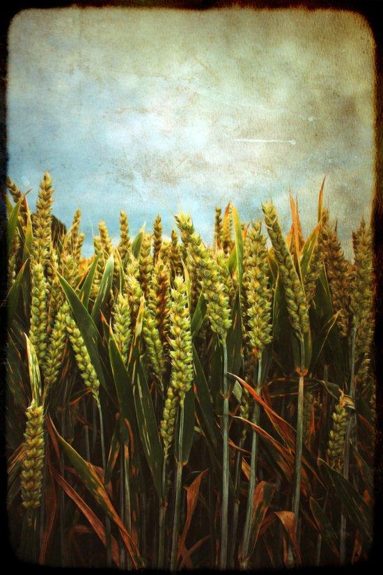 Corn Art Print