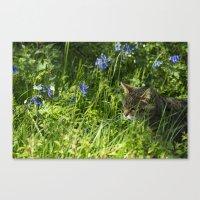 Bluebell Feline  Canvas Print