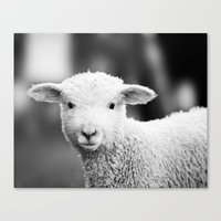 Lamb In Black And White Canvas Print