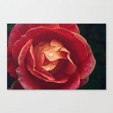 cls p rose Canvas Print