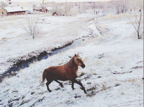 Winter Hill Horse Canvas Print