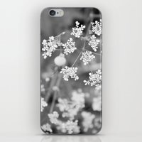 Queen Anne's Lace Wildflowers iPhone & iPod Skin