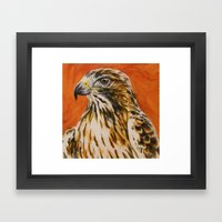 Red Tailed Hawk Framed Art Print