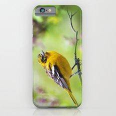 Spring Oriole iPhone 6s Slim Case