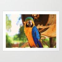 ~Bird Beauty~ Art Print