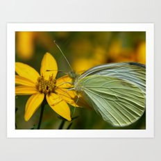 white moth II Art Print