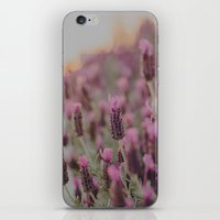Lavender Stories iPhone & iPod Skin