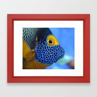 Blue-faced Angelfish Framed Art Print