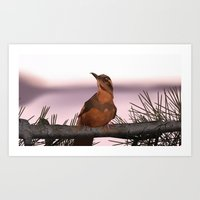 Opening Bird Art Print