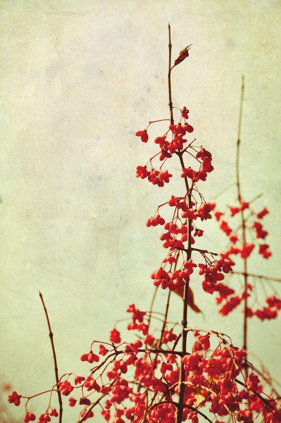 autumn berries Canvas Print