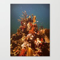 Sea Life Canvas Print