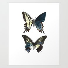 Gynandromorph No.1 Naturalist Butterflies Art Print